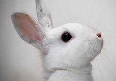 Kosmetyki testowane na zwięrzętach zakazane w UE