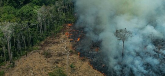 Amazonia ma być dalej niszczona