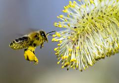 Unia Europejska przeciw pszczołom