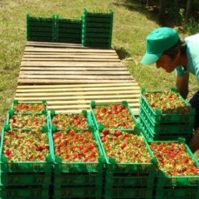 Sklepy w Bułgarii mają sprzedawać lokalne produkty