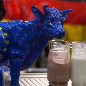 Unia Europejska nakłada wysoką karę za nadprodukcję mleka