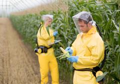 Powierzchnia upraw GMO na świecie wzrosła o 3 procent
