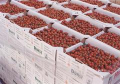 Czesi chcą ograniczyć import żywności z zagranicy