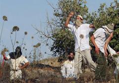 izraelscy-osadnicy