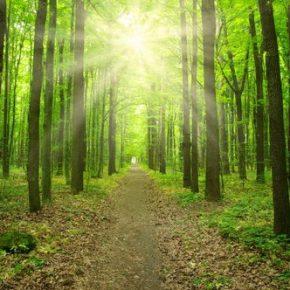 Lasy Państwowe nie wejdą w skład nowej spółki