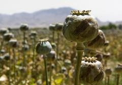 Iran wzywa do globalnego przeciwdziałania produkcji narkotyków