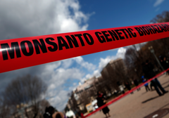 "Obama podpisał ""Monsanto Protection Act"""