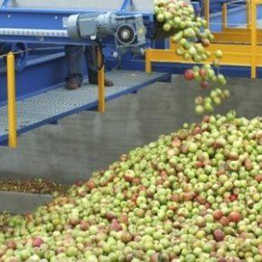 Nie opłaca się produkować jabłek