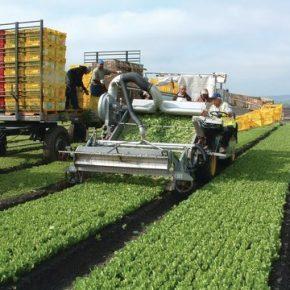 Ograniczenie imigracji pozytywne dla rolnictwa