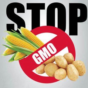 Polskie mleczarnie przeciwko paszom GMO