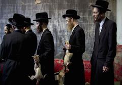 Żydzi skarżą się do Trybunału Konstytucyjnego ws. zakazu uboju rytualnego w Polsce