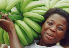 Banany GMO: testowane na Amerykanach, uprawiane w Ugandzie