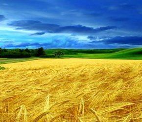 Rolnicy apelują o dostęp do Ukraińców